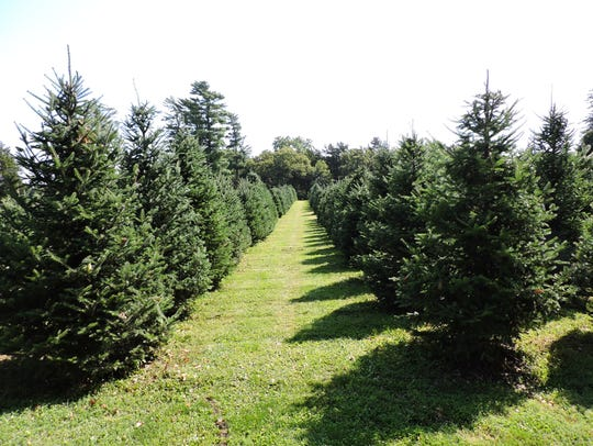 Howell's Tree Farm is located at 3129 Howell Court,