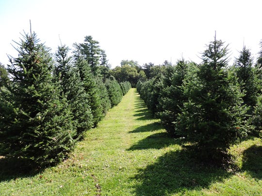 Howell's Tree Farm is located at 3129 Howell Court, Cumming.
