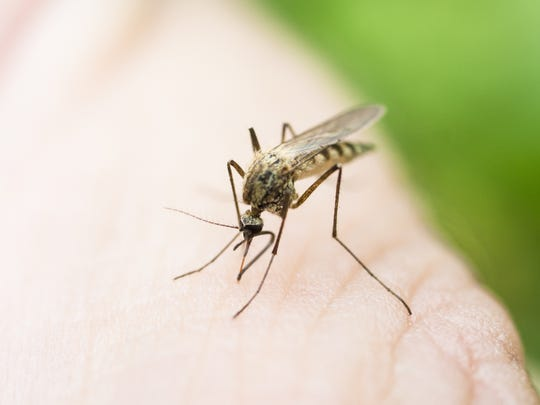 You know this photo of a mosquito is making you itchy