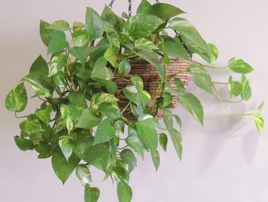 houseplant-5.jpg