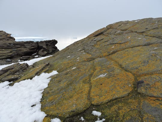 Lichens growing in an ice-free area in Marie Byrd Land,