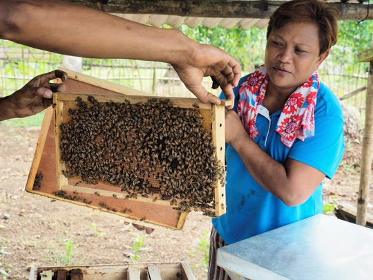 Yolanda Colbe examines bees on the farm she started