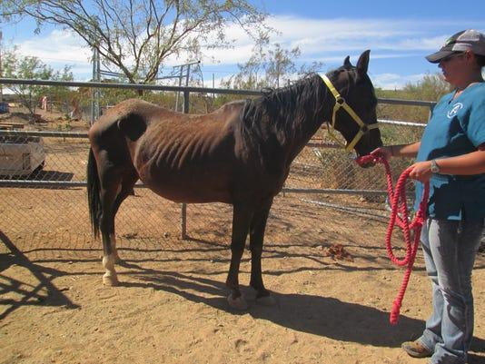 Animal-neglect case