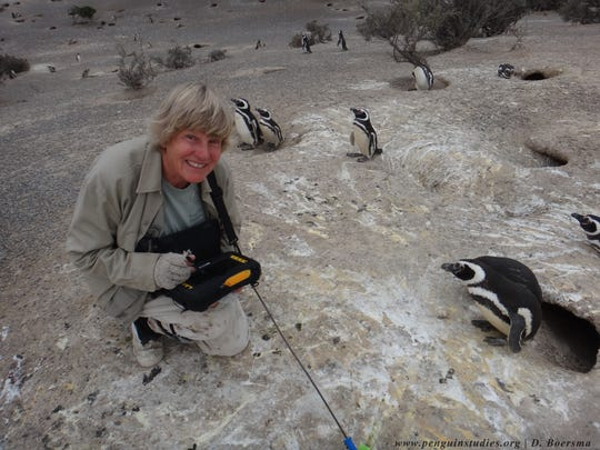 P. Dee Boersma is one of six finalists for the 2018 Indianapolis Prize, the world's top animal conservation award with a $250,000 cash prize.