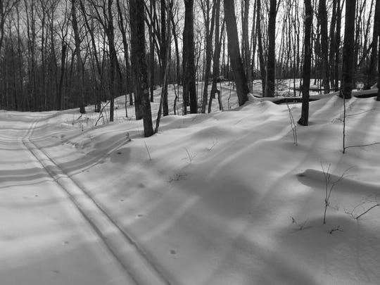 Ski trails are wonderful places to see fox tracks,