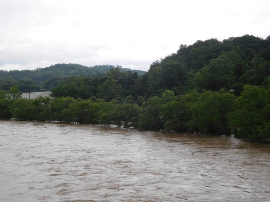 This line of trees downstream from Pearson Bridge off Riverside Drive usually sits above the waters of the French Broad River, but that was not the case Wednesday morning.