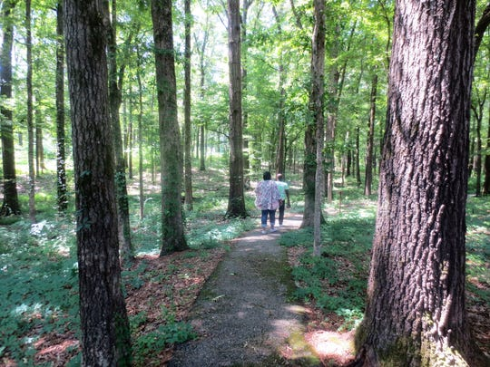 One of the many hiking trails off the Natchez Trace Parkway near Tupelo.
