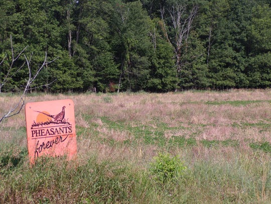 The orange Pheasants Forever signs show that the field