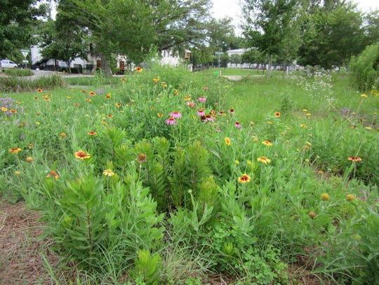 A wildflower meadow successfully growing in an urban