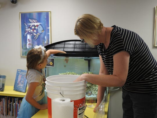 Serenity Arens, 7, of Coshocton adds a snail to the new saltwater aquarium at the Coshocton Public Library with Meghan Douglas.