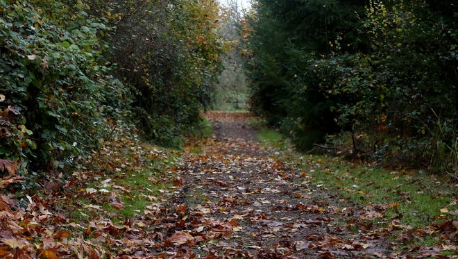 A hiking trail at Willamette Mission State Park on Wednesday, Nov. 11, 2015.