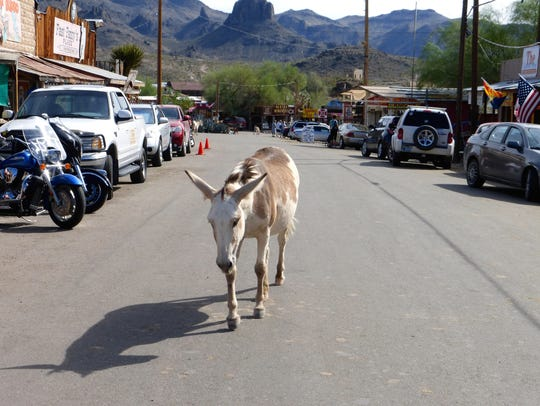 Burros are Oatman's best known ambassadors.