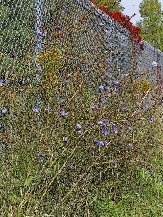 BHM noxious weed ordinance