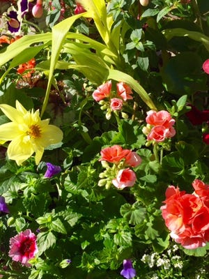 is there anything more fun for the springtime gardener than filling a flat full of colorful annuals?