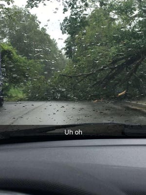 Tiffany Roberts snapped this photo of a tree down near the Dunn Center at Austin Peay State University.