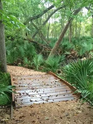 Palmetto State Park will offer Painting in the Park Jan. 28.