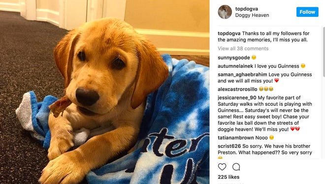"An Instragram post on Guinness' ""topdogva"" account shares the news of the year-old dog's passing."