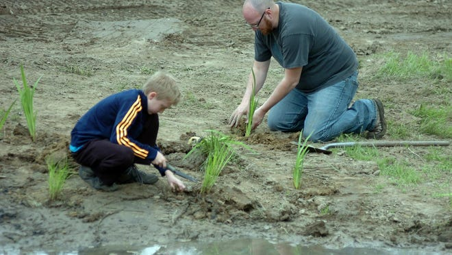 Scot Martin and his son Cai, 12, plant plants native to Michigan such as brown fox sedge and swamp milk weed in an area that will help filter water running in the Rouge River.