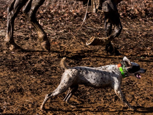 National Bird Dog Championships