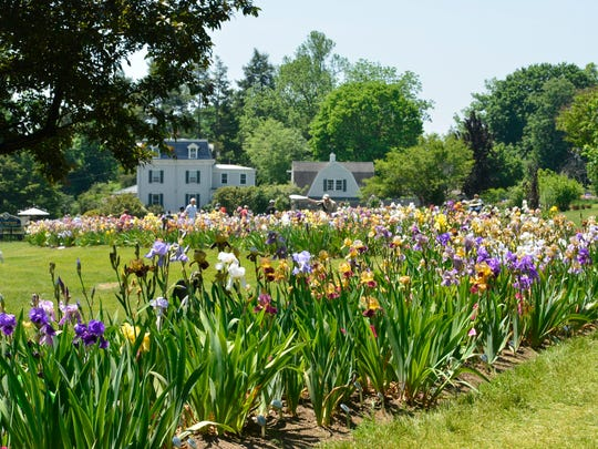 The Presby Memorial Iris Gardens in Montclair