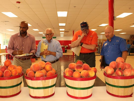 Four judges consider the best peaches grown by Chilton County farmers during the annual peach festival competition Saturday. Alvin Benn/Special to the Advertiser