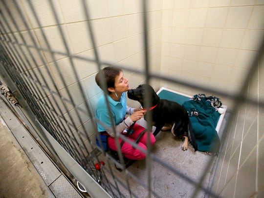 Bex Lipson crouches inside of the kennel as she puts