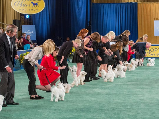 Scenes from the 2018 American Rescue Dog Show produced