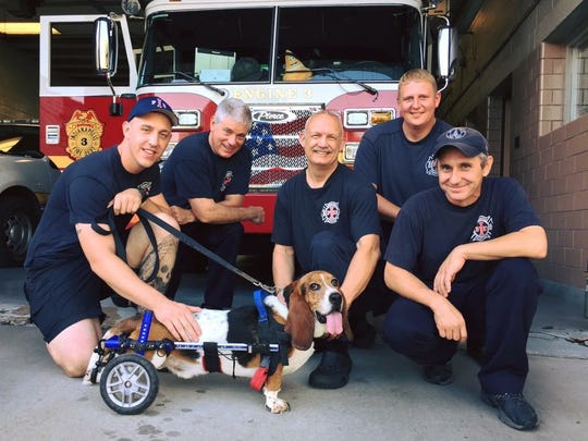 Charlie always looks for his friends at Indianapolis Fire Department's house in Fountain Square.