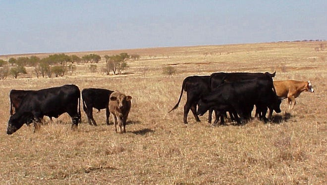 Dry conditions are forcing cattle producers in some areas to provide supplemental feed earlier and more frequently than normal. Some areas of the state received significant rains, but most of the state lingers in drought are are nearing drought conditions rapidly.