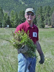 Ron de Yong carries a load of spotted knapweed during