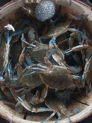 Live crabs are shown at Crabs Plus in Mt. Ephraim Avenue.