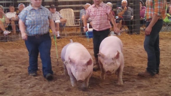 Showtime at the Augusta County Fair.