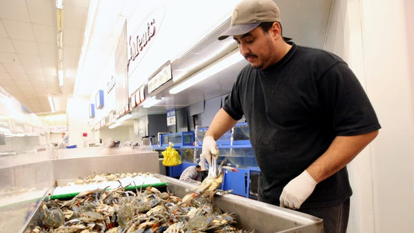 Tommy Rivera wrangles live crab at Saraga...