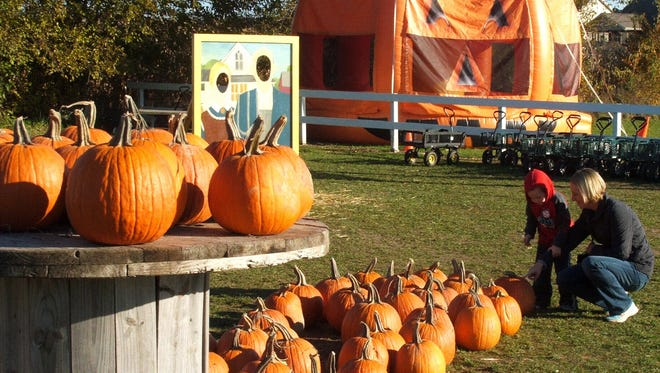 Orange attractions abound at Colony Pumpkin Patch, as Kim Anderson and son Connor of Shueyville found out this week.