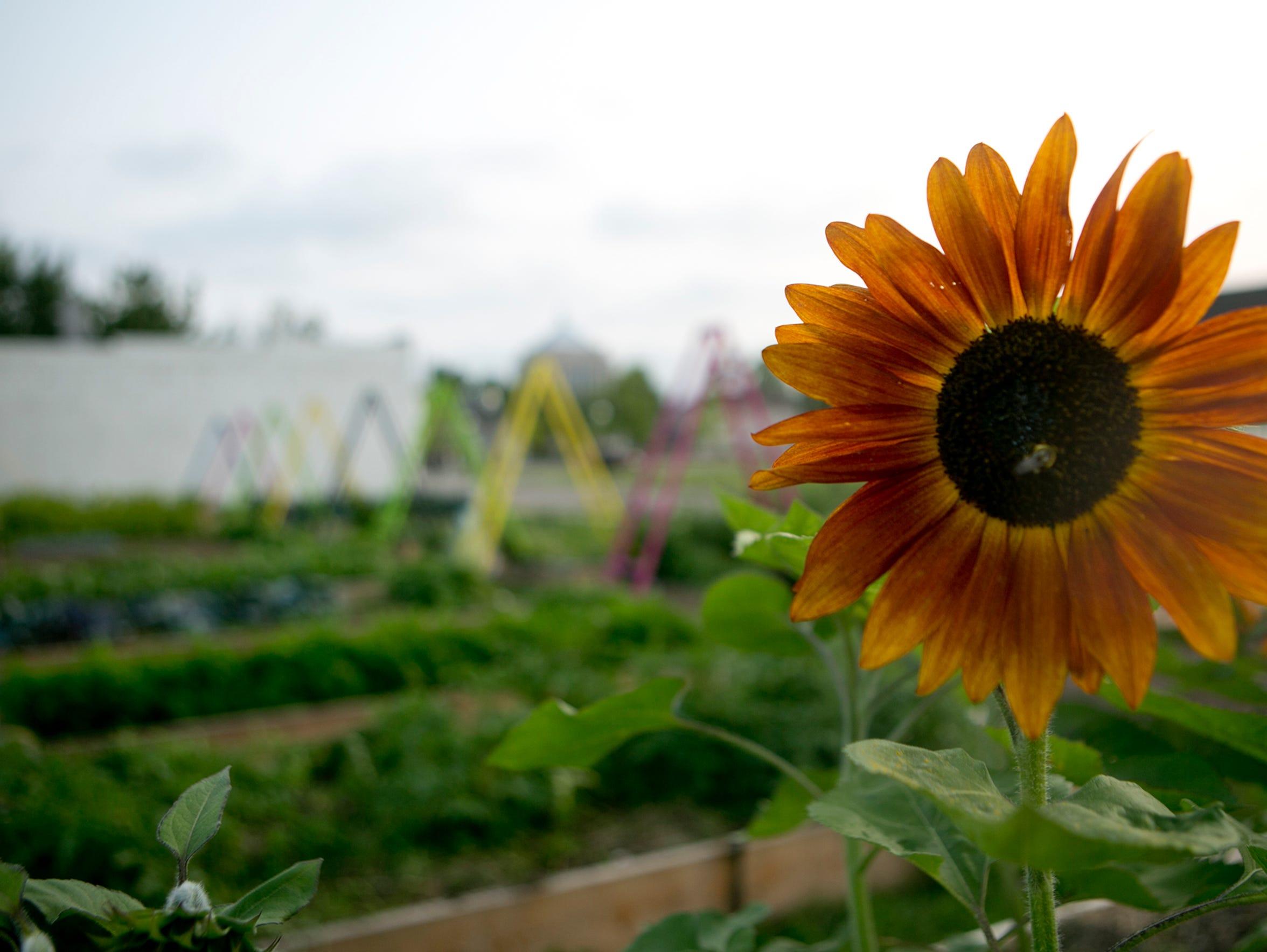 A flower grows in Gabby's Garden, a memorial to Gabrielle