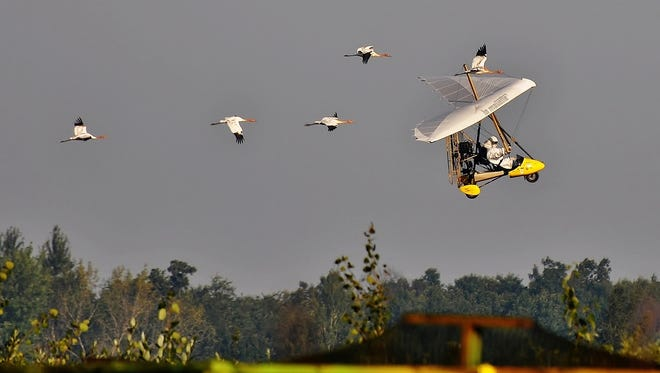 Whooping cranes train with ultralight.