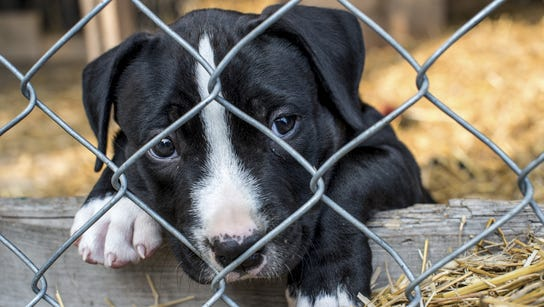 Stock photo of a caged puppy waiting for adoption