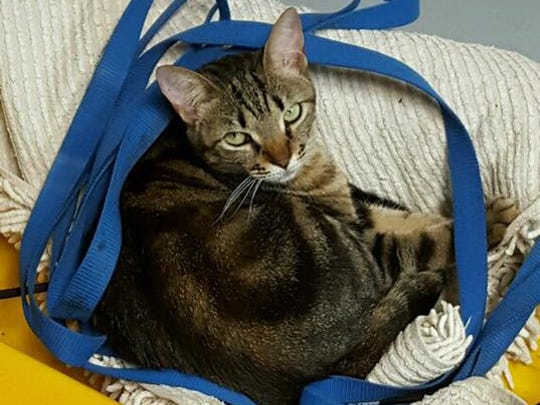Delilah is missing from the St. Andrews Boulevard and Quail Hollow area.