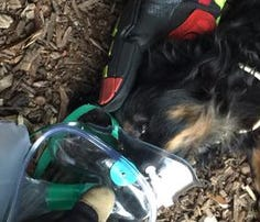 Tampa firefighters resuscitate dog during fire call