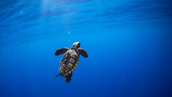 Celebrate the 35th anniversary of Gumbo Limbo Nature Center this Saturday at the free Sea Turtle Day Festival.