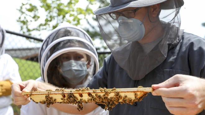 Vet hospital residents Dr. Megan Partyka, left, and Dr. Gregory Walth while they inspect a beehive frame.