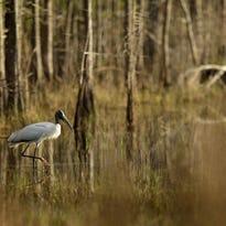 Participants are led in a recent group meditation at Corkscrew Swamp Audubon Sanctuary.