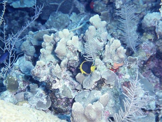 "Underwater photographer David ""Doc"" Cunningham said"