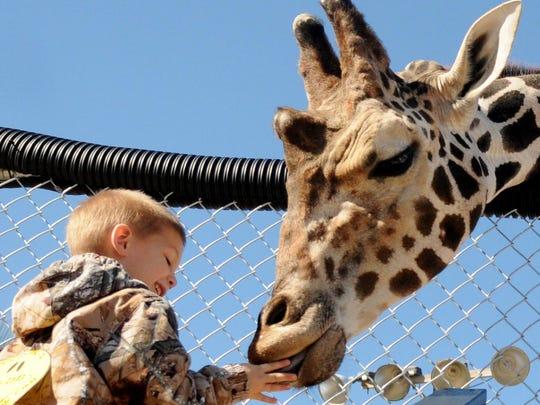 Jacob Leslie smiles as he feeds the giraffe a carrot