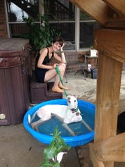 Greyhound Anya cools off in a wading pool, leaving