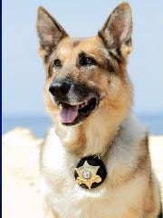 Sheriff's K-9 Officer Falko