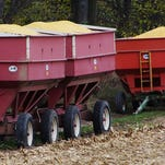 'Unpleasant' year for grain producers predicted