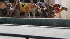 Greyhound activists plan protest in Bonita