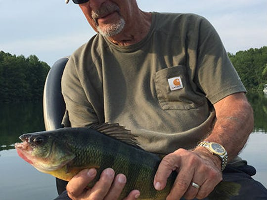 Richard Marsich's record yellow perch measured 15 7/8 inches.