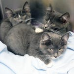 Animals available for adoption right now at HSHV